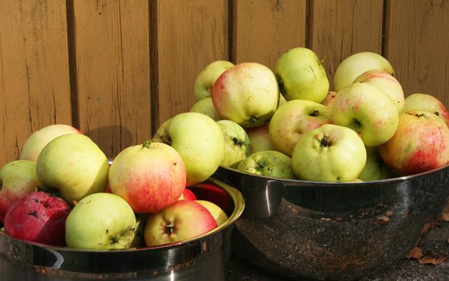 Omenapuilla22