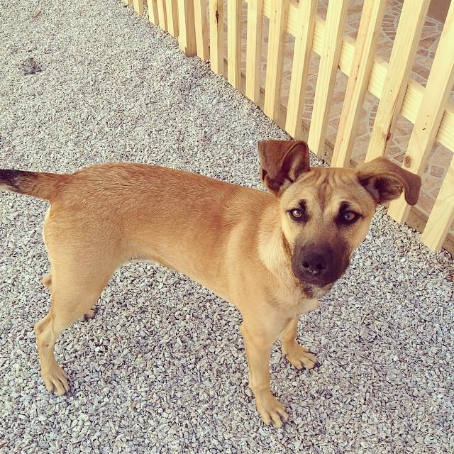#desafioprimeira 18- Bicho: meu cachorro chamado Sapeca.