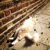 Fluffy kitties of De Beauvoir.