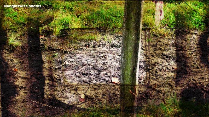 Muddy path, Solothurn