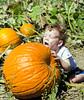 Gabe licking a pumpkin