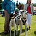140525 Greyhound Extravaganza-0143