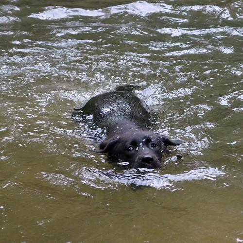 swimming sugarhoney