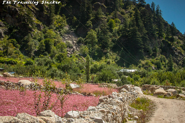 Sangla Valley (13)