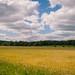 early summer landscape