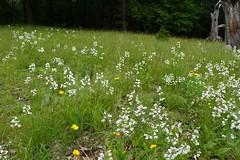 Hierwarter Wildacres Preserve Montville New Jersey