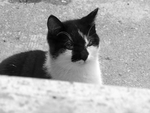 gatto_Baldissero2014_IMG_1468 copia
