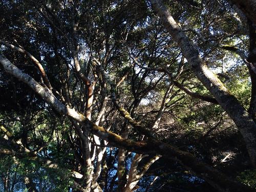 Sawyer Camp Trail in San Mateo, CA