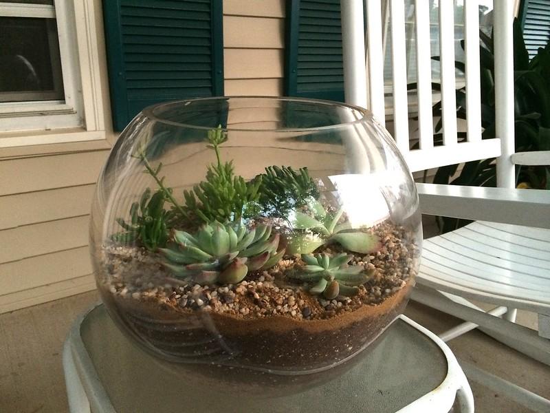 A Diy Terrarium Kate Inspired