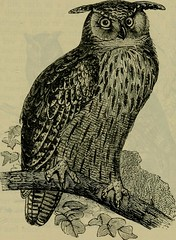 """Image from page 568 of """"Reptiles and birds : a popular account of their various orders, with a description of the habits and economy of the most interesting"""" (1883)"""