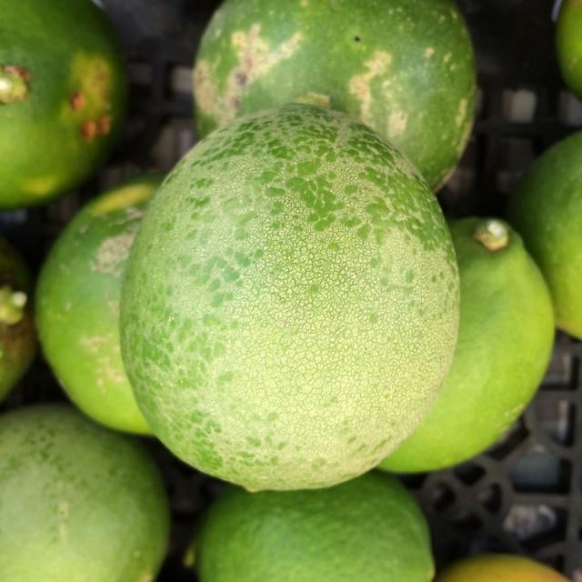 Citrus 215 Meyeri The Meyer Lemon Spider Mites Feeding Inj