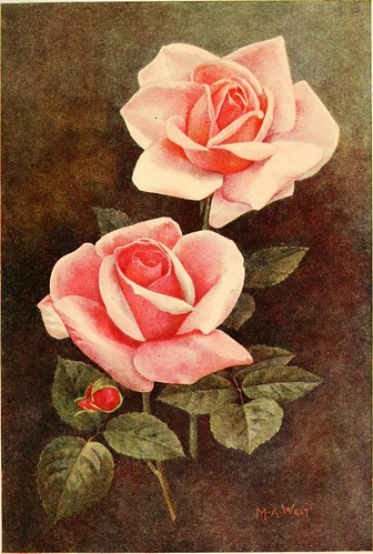 "Image from page 108 of ""Rose gardening; how to manage roses and enjoy them"" (1922)"
