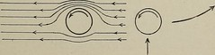 """Image from page 212 of """"Popular science monthly"""" (1913)"""