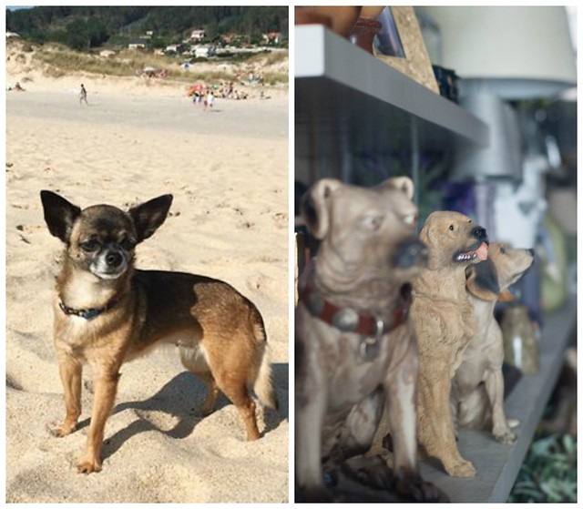 perros Collage