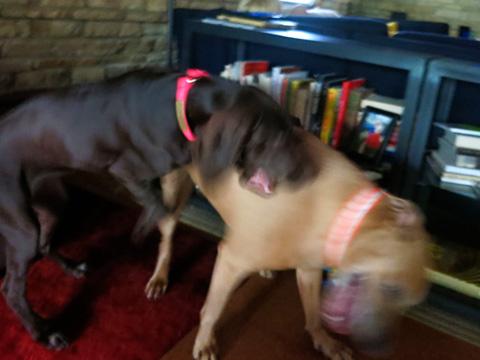 dogday1-0814