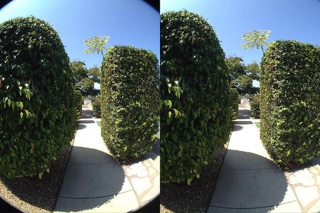 Camera Roll-5155