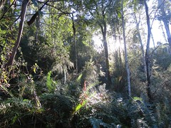 2014-08-10 Lilydale Falls 098 - Sunlight through trees