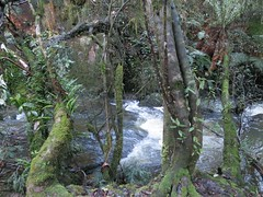 2014-08-10 Lilydale Falls 063 - Trees by Second River
