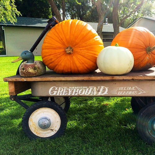 #wagon #vintage #greyhound #pumpkins #duck #decoy #wood #lynnfriedman #kitsch