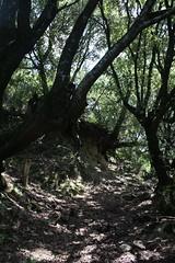Wald Guarguale