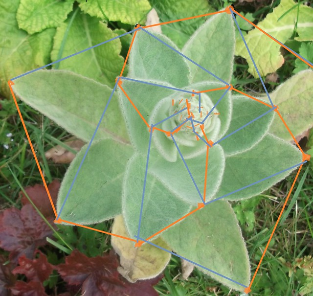 DSCF8362 fibonacci