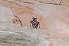 Pictographs / Temple Mountain Site