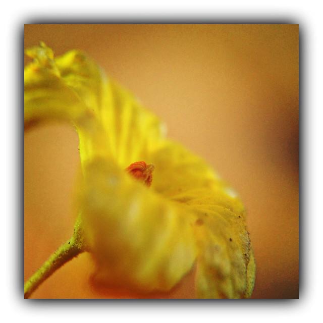befunky flower