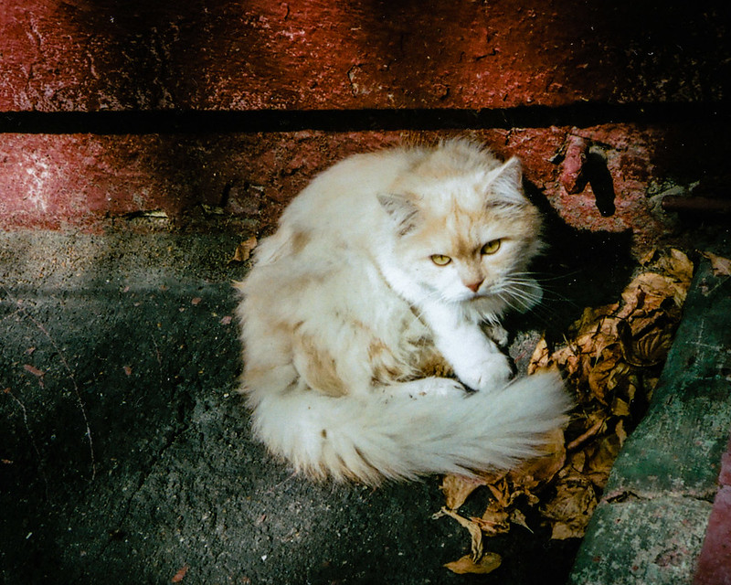 «Cat from the Luigi Longo Street»