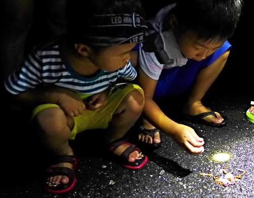 在導覽員帶領下,小兄弟觀察被車輛壓扁的中型仿相手蟹;攝影:陳文姿。
