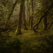 Woodland Wanders by Mark Littlejohn