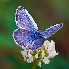 Weekly Spiritual Digest: Live a New Life (Colossians 3:12-15) Live a new life and make allowances for people's faults. God has forgiven you so you must forgive others. When I think of starting a new, I think of butterflies--they symbolize love, peace, and