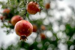 Il frutto dell'eterna giovinezza