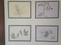 志工植物科學繪圖作品。