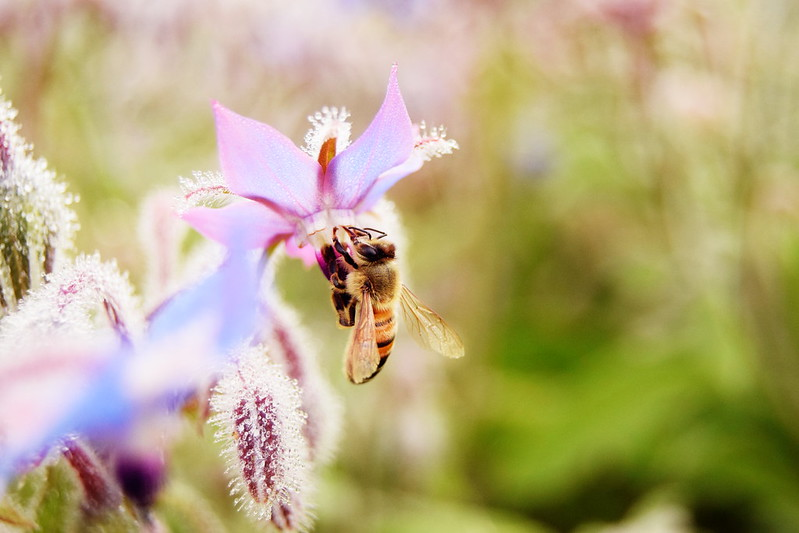 mehiläiset, sumuu, shopping 127