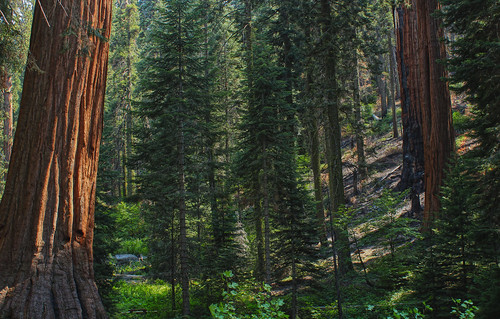 bigtrees sequoianationalpark giantsequoias giantforest canonphotography californialandscapes tularecountyca canont4i