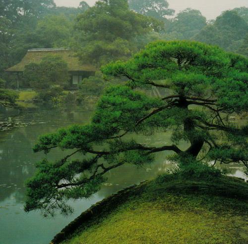 ■桂離宮 日本の美■ 西川 孟