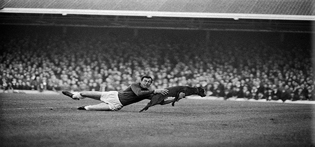 filbert st gordon banks catches dog