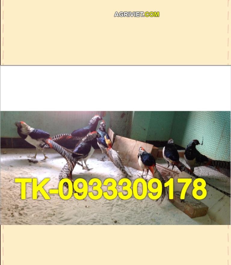 15235526935_8d42a862b6_o.jpg