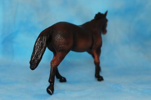 Walkaround of the Mojo Fun Sooty Bay Quarter Horse Stallion 15262893402_71897b9a12