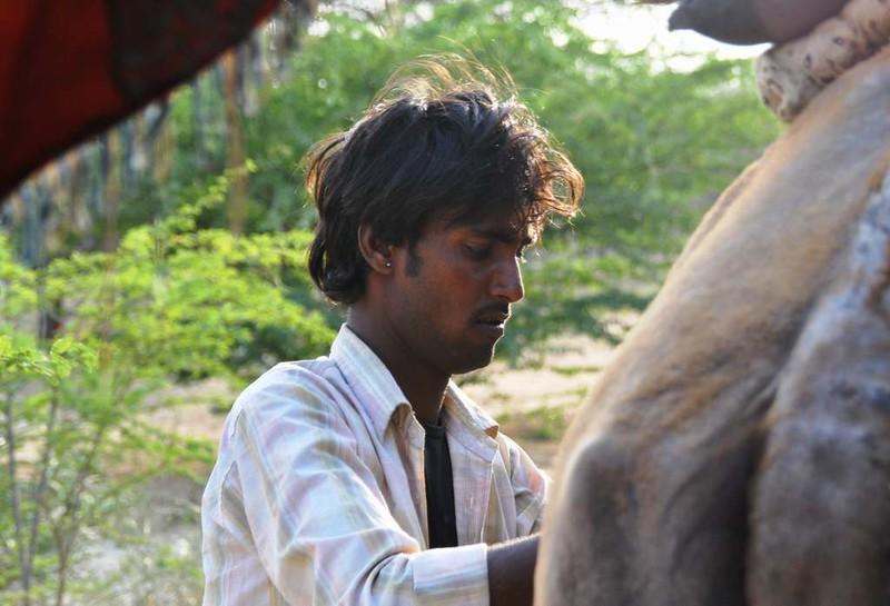 244 Camel safari a Jaisalmer (8)