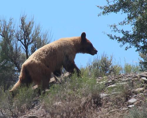 2015 animals blackbearursusamericanus carnivores colorado flickr gps landscapes mammals usa unitedstatesofamerica