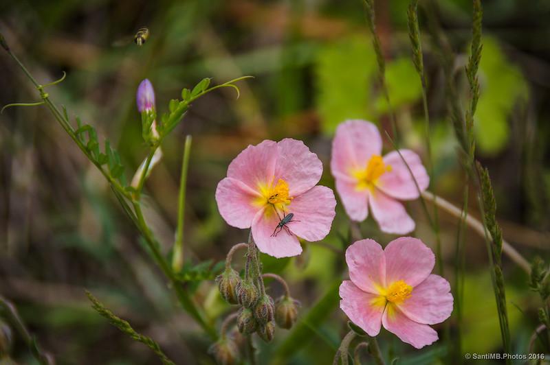 Flores e insectos varios