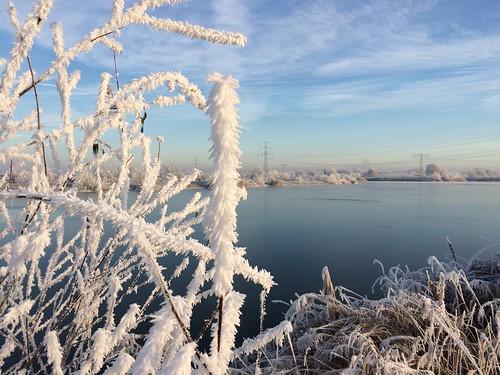 Schilf im Wintermantel , NGID1478223281