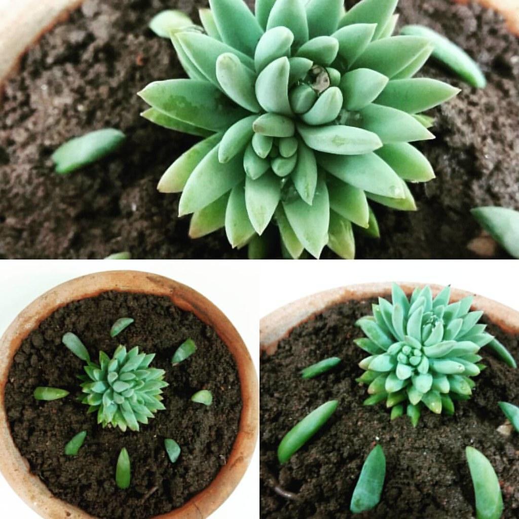 Replantando Suculentas Plantas Suculentas Replantando Flickr