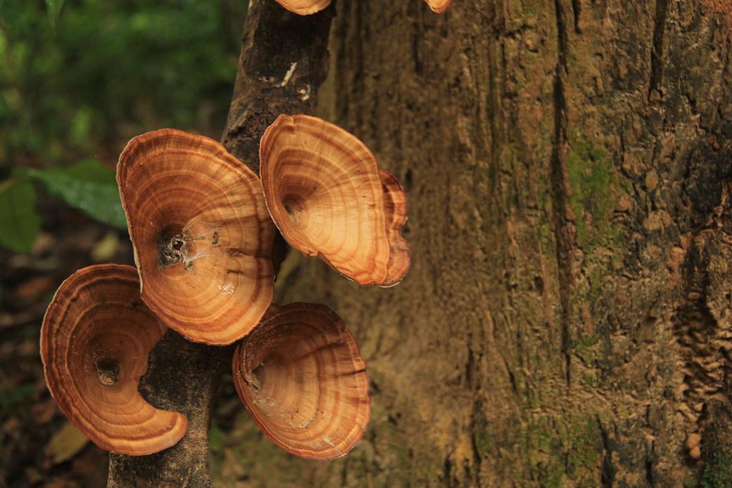 Mushrooms, Khao Sok National Park