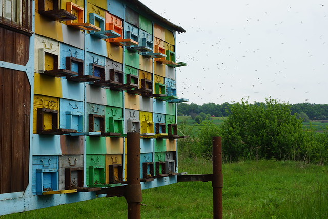Beekeeping in Romania