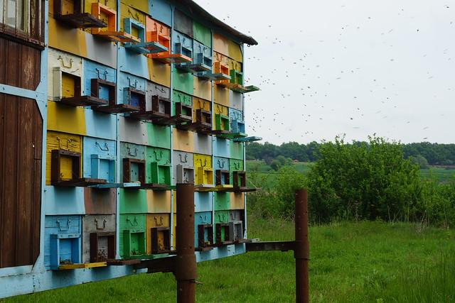 Beekeeping in Romania