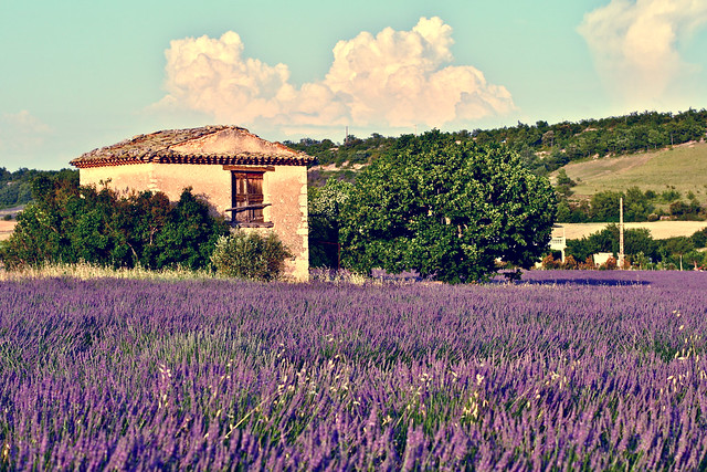 Reasons to Visit Provence