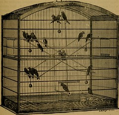 "Image from page 72 of ""Bishop, the bird man's book, on the care and management of birds"" (1886)"