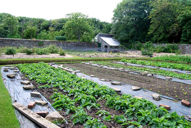 Vegetable Gardens at Balfour Castle